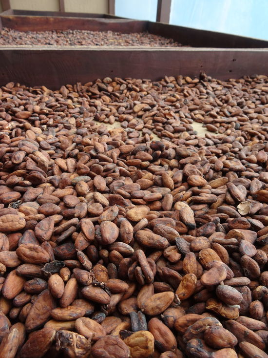 Coffee beans. Abundance Close-up Coffee Bean Day Food Food And Drink Freshness Healthy Eating Indoors  Large Group Of Objects Nature No People Nut - Food