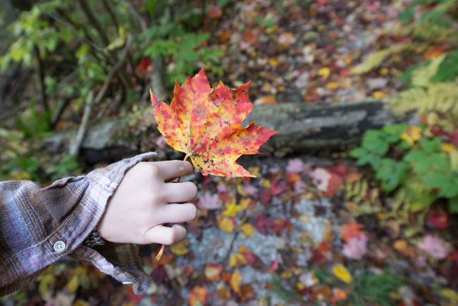 Leaf In Hand Hand Autumn Colors Fall Colors Fall Beauty EyeEm Nature Lover EyeEm Gallery Hikingadventures Nikon Huffpostgram Nature Photography Hello World Enjoying Life