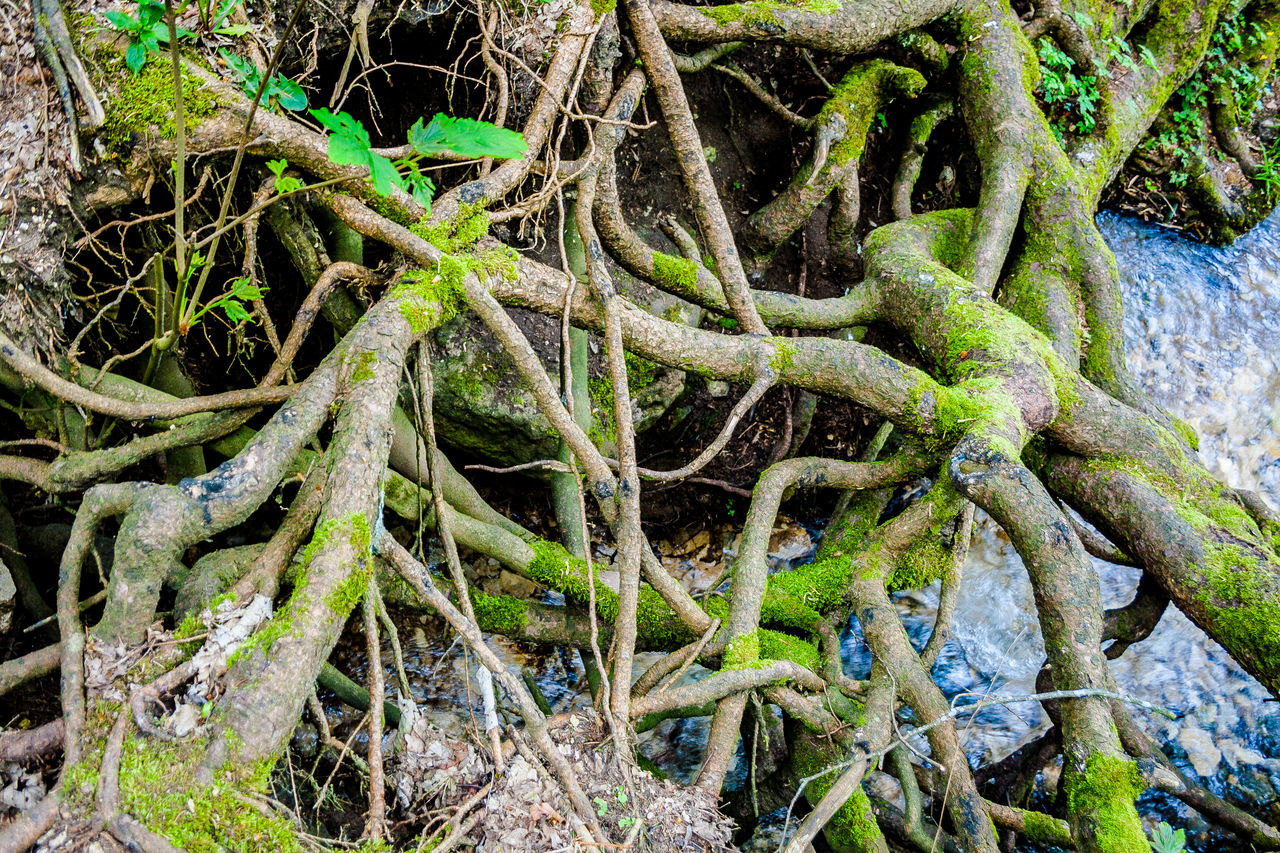 Moss Natur Nature Overgrown Root Roots Roots Of Tree The Natural World Tree Water