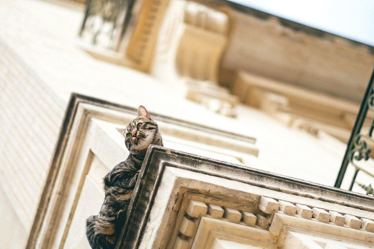 Beautiful stock photos of katzen, Alertness, Animal Themes, Architecture, Balance