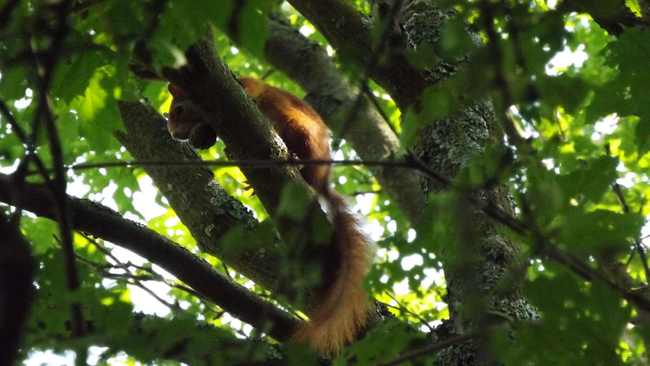 Animal Themes Beauty In Nature Eichhörnchen Life Mammal Nature Nature No People Outdoors Squirrel Tier Tree Wildlife