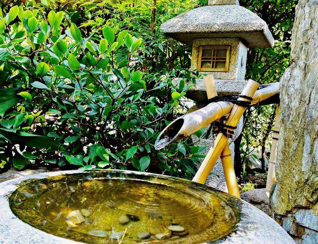Japanese Garden Tranquility Zen Garden