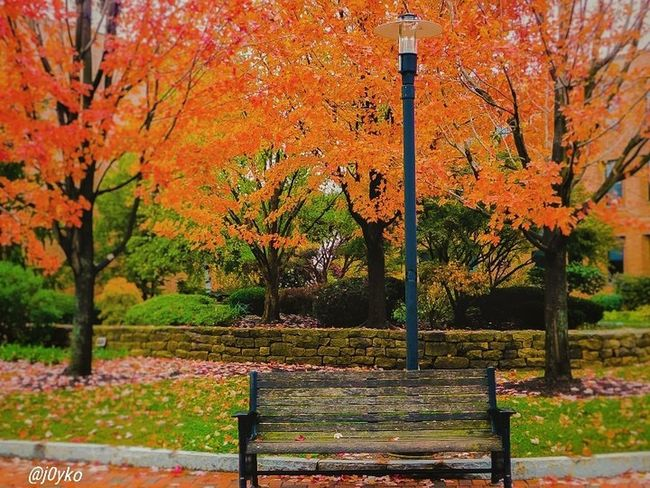 🍁 Autumn Beauty In Nature Nature Outdoors Tranquility No People Day Park - Man Made Space Multi Colored