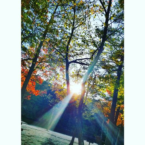 Fall Beauty Fall Leaves Tree Branches Sun Light Beautiful Taking Photos Beauty In Nature Fall Colors Amazing View