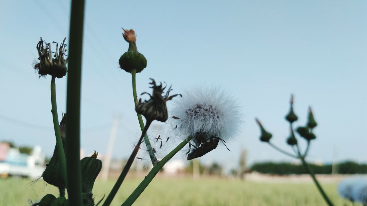 growth, flower, nature, plant, beauty in nature, fragility, no people, outdoors, day, freshness, close-up, flower head, sky