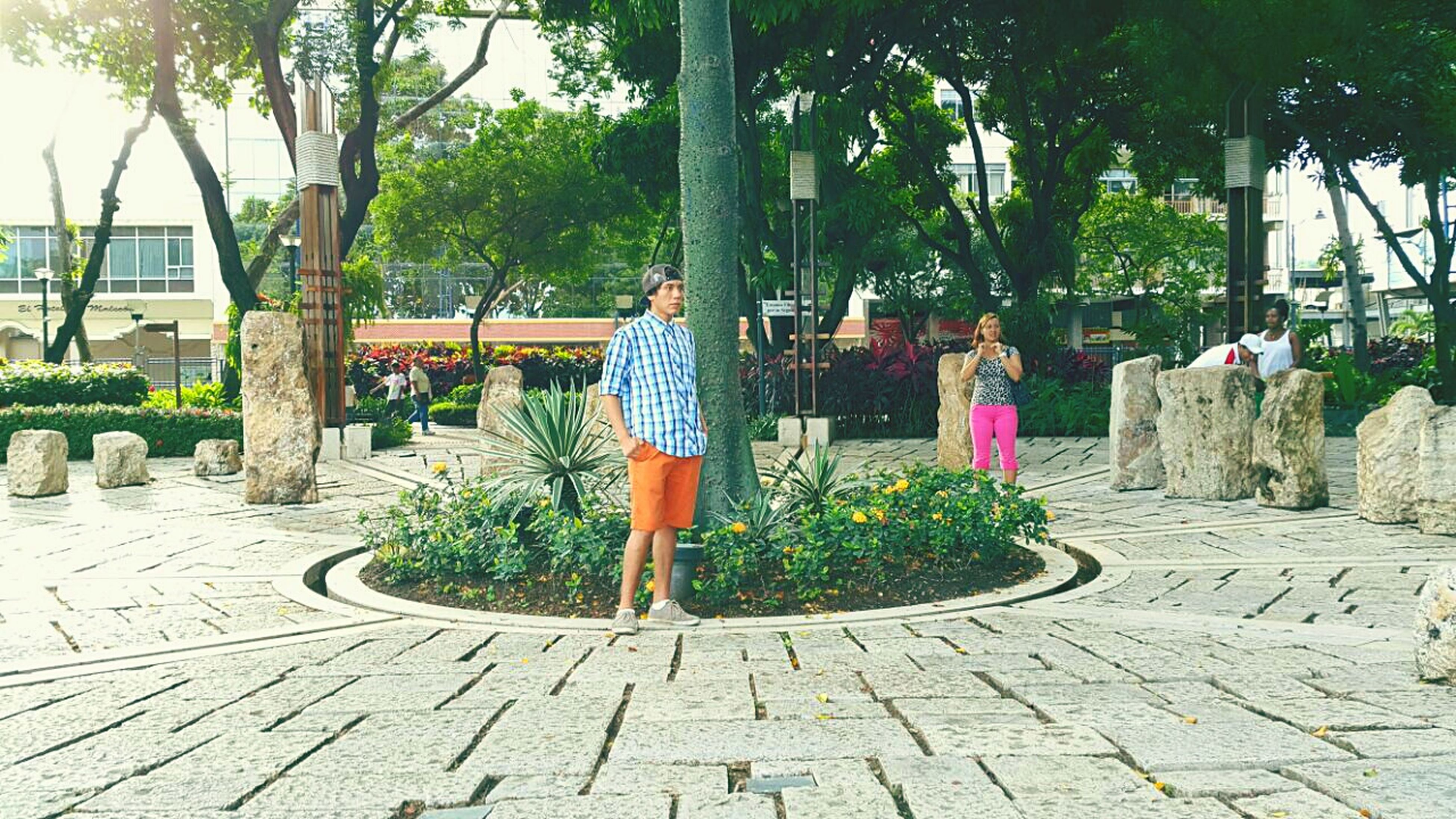 tree, sidewalk, street, potted plant, palm tree, footpath, growth, plant, outdoors, incidental people, day, sunlight, cobblestone, green color, park - man made space, paving stone, road, building exterior, chair, walkway
