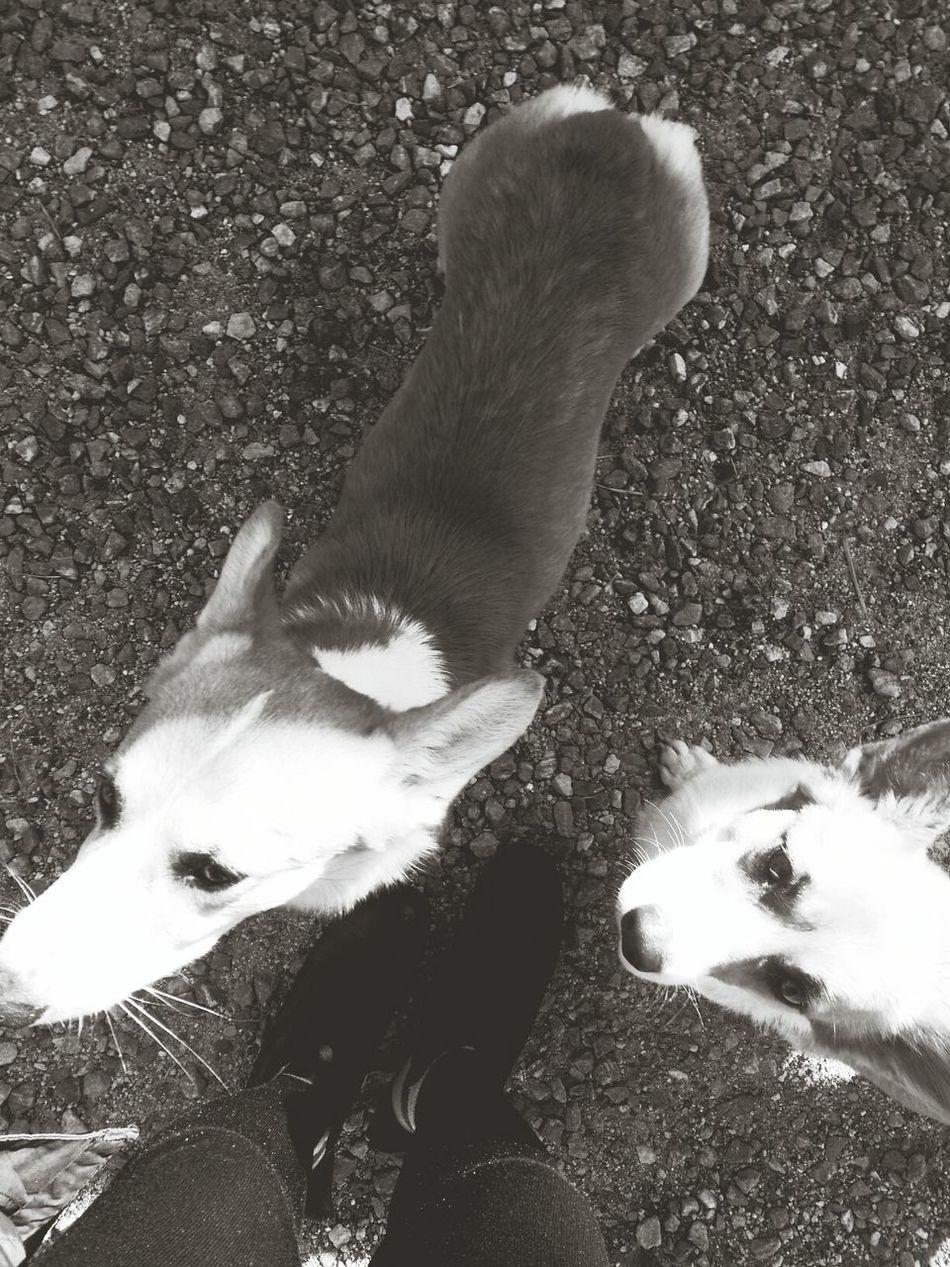 My Dogs Are Cute ! Doggie Love