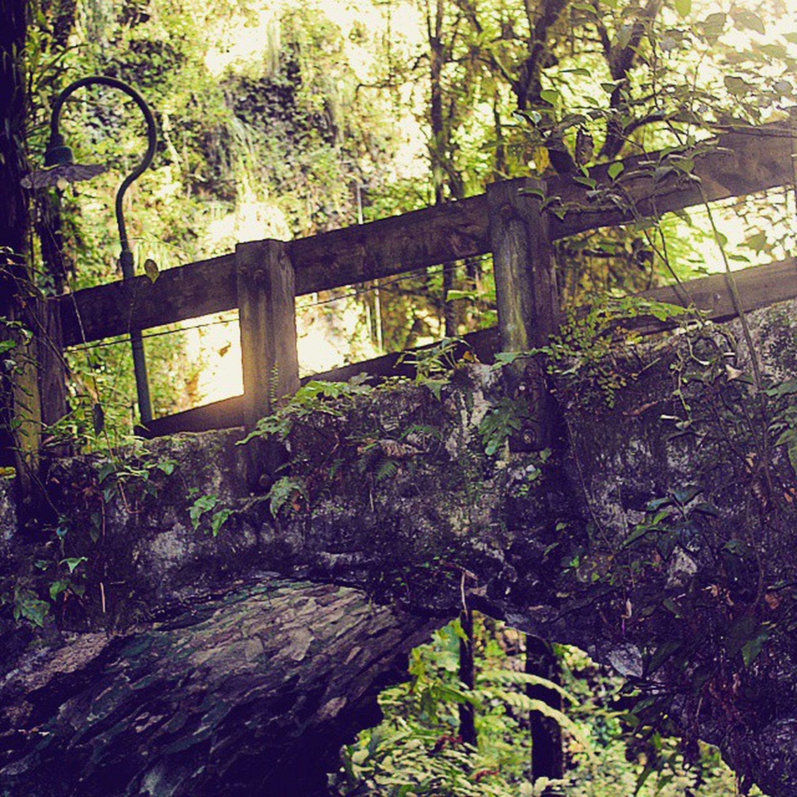 tree, growth, green color, plant, nature, tranquility, day, built structure, wood - material, old, outdoors, forest, no people, moss, park - man made space, sunlight, abandoned, auto post production filter, tree trunk, wall - building feature