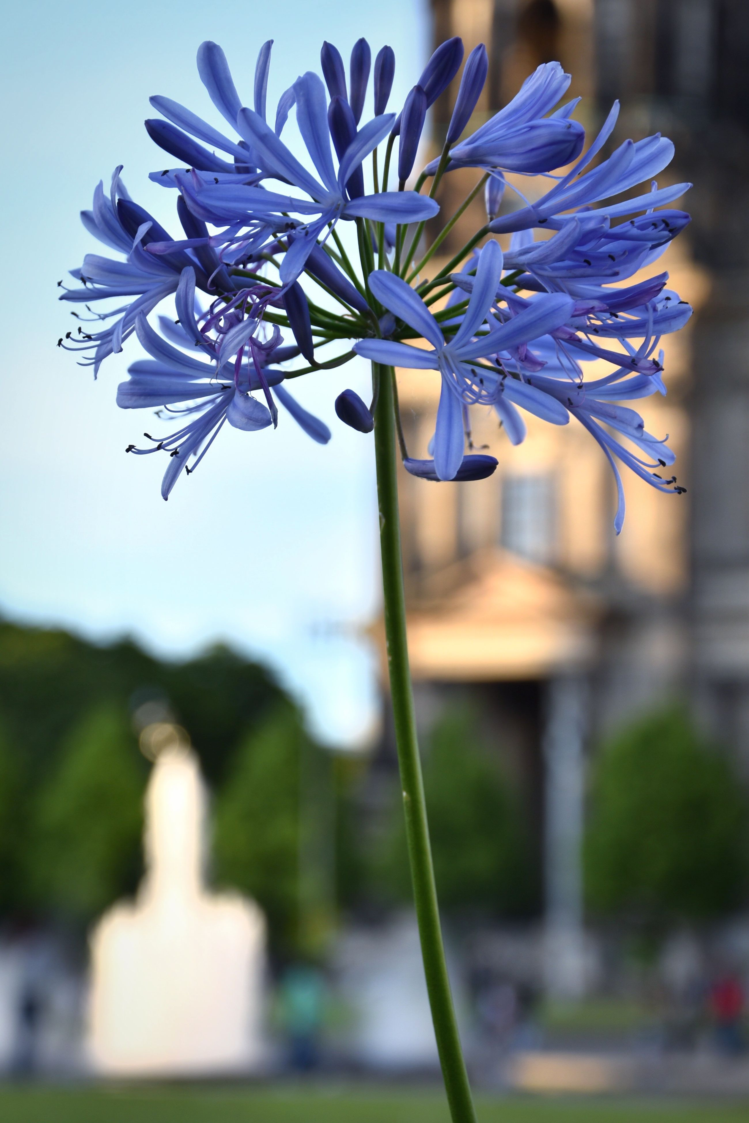 flower, fragility, nature, beauty in nature, petal, growth, freshness, focus on foreground, plant, outdoors, no people, day, purple, flower head, close-up, blooming, hyacinth, sky