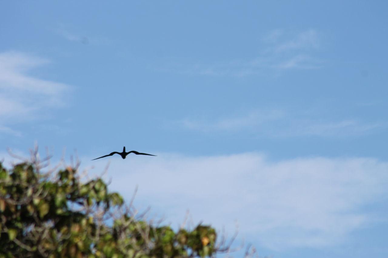 Flying Cloud - Sky Nature No People Bird Photography Bird In Flight Charlestown Nevis Caribbean