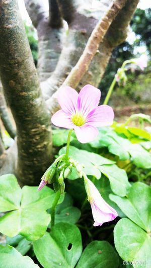 IFlower Flowers