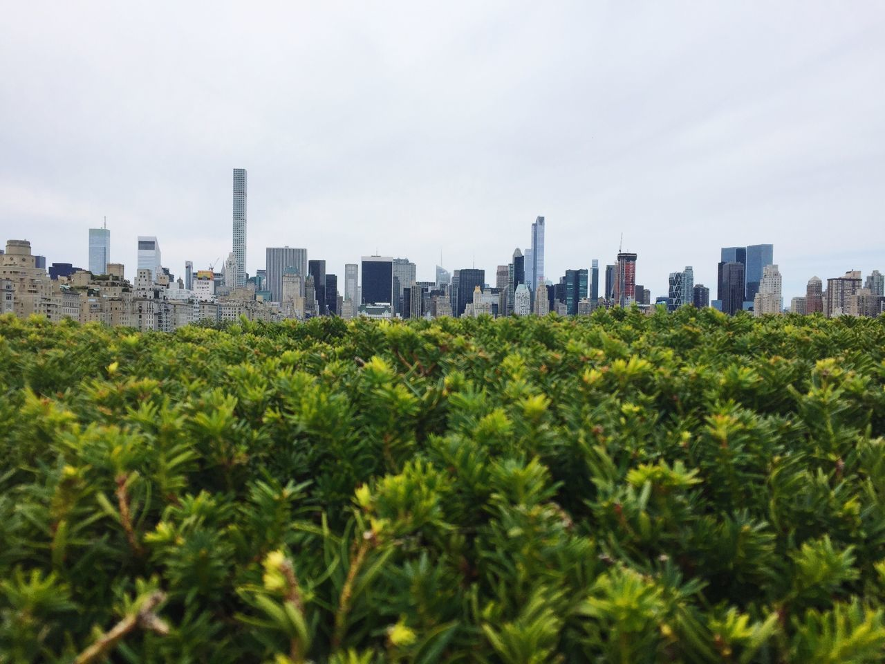 Adapted to the City NYC New York City skyscraper Skyline Green Plants City building exterior Architecture City Cityscape urban skyline outdoors Green color no people Growth Tree built structure Modern sky day Nature
