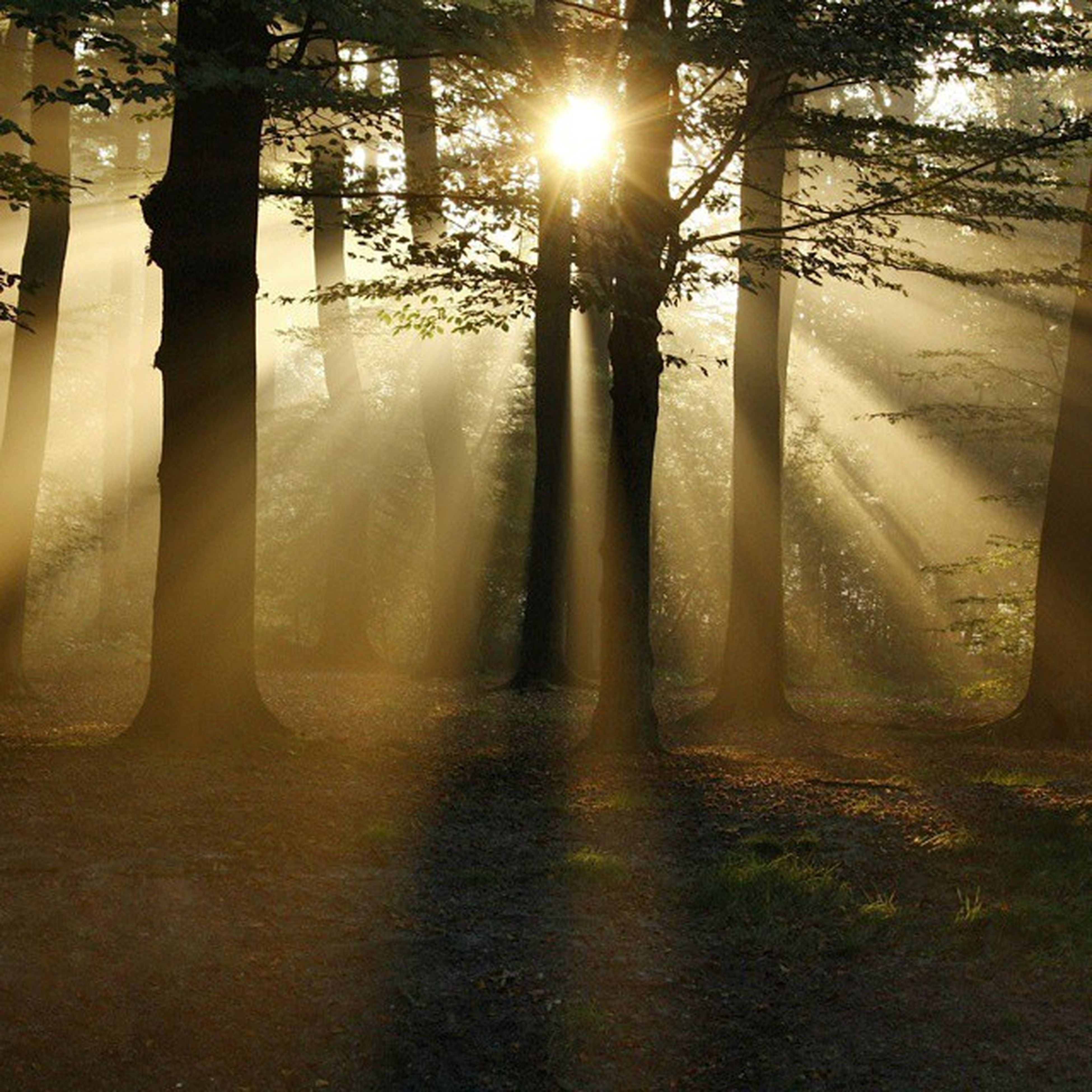 My click Sony_xperia That's Kodaikanal for you 😉 Paradise on earth 🌏 No edits Woods Summer Sun Coakers_walk Nature @narmadavs @radhika_vaidun
