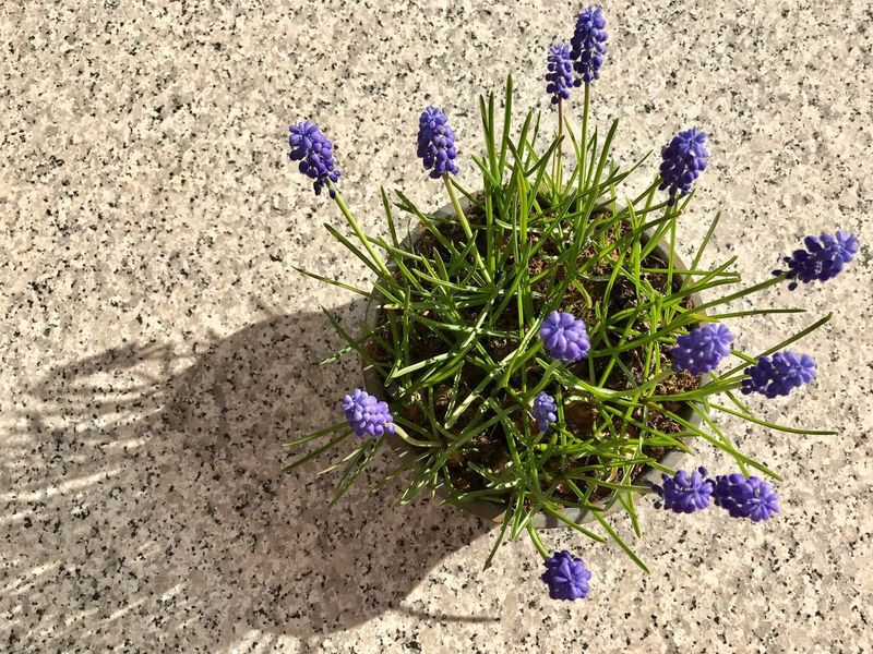 Flower Nature Purple Outdoors Beauty In Nature Plant Blooming Nature Spring Flowers Sun Shadows