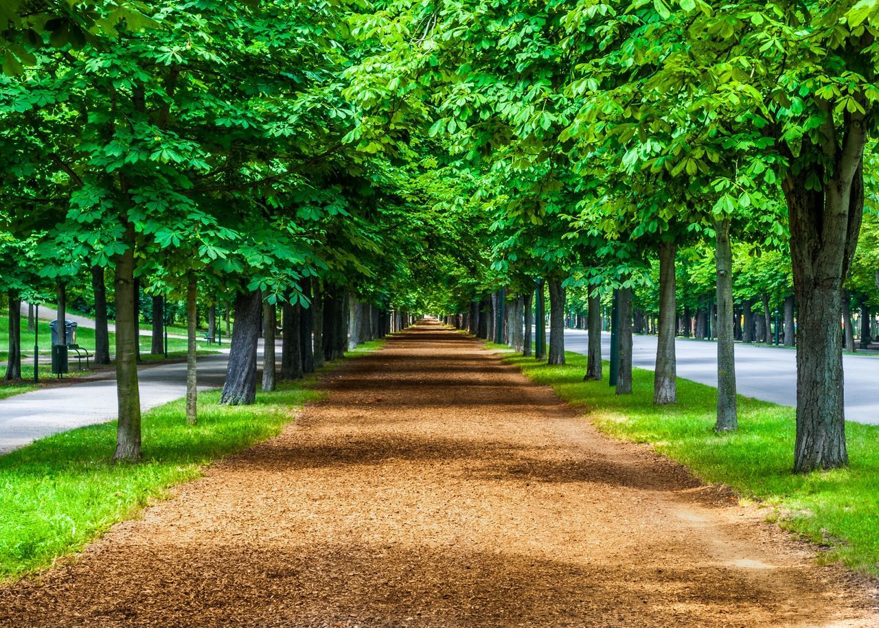 Beautiful stock photos of vienna, Branch, Day, Green, Growth