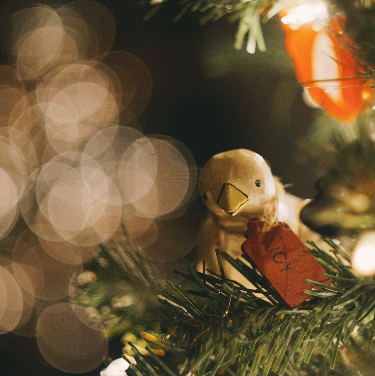 Beautiful stock photos of christmas tree, Animal Representation, Art, Bird, Celebration