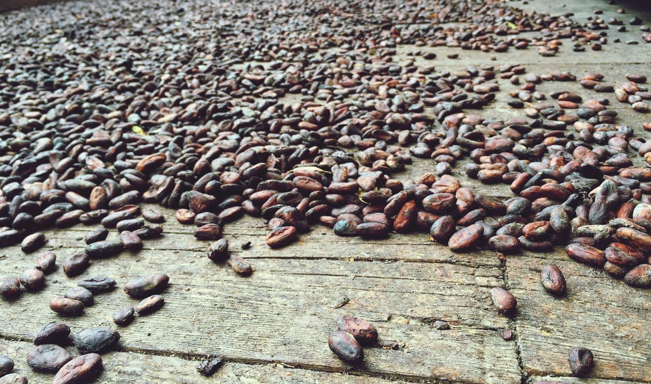 Cacau on its long Journey to Delicious Chocolate First Eyeem Photo