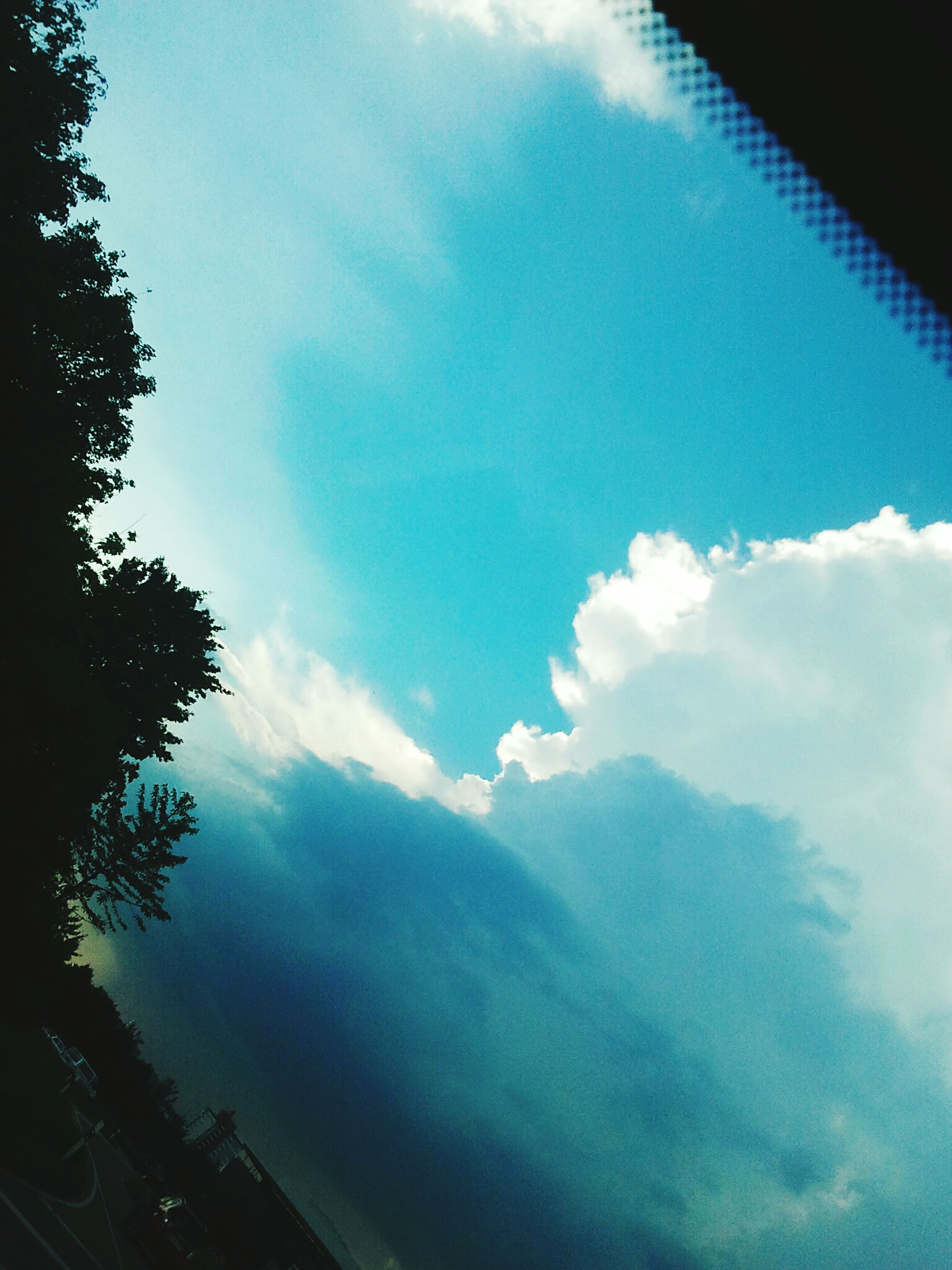 low angle view, sky, tree, scenics, beauty in nature, tranquil scene, cloud - sky, tranquility, nature, blue, day, outdoors, cloud, non-urban scene, majestic, no people, cloudscape, cloudy