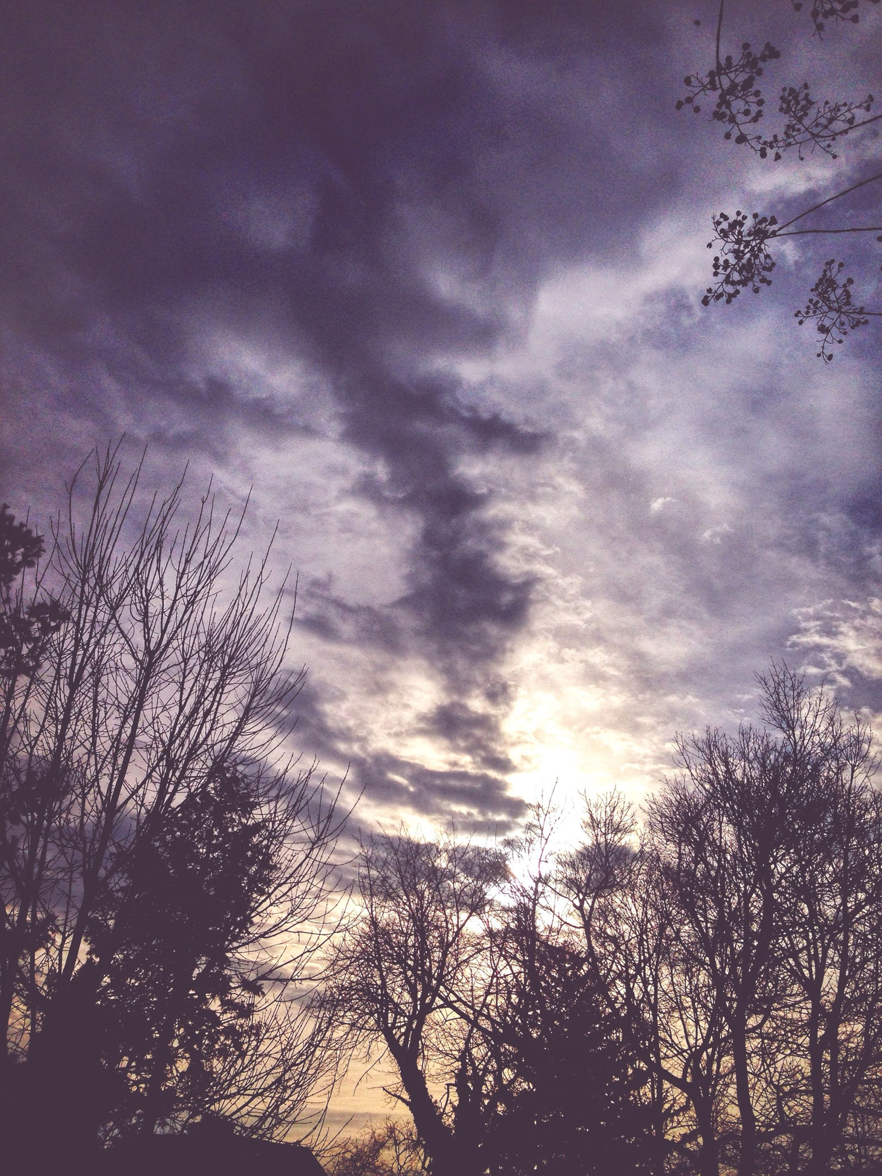 tree, silhouette, sky, low angle view, bare tree, cloud - sky, branch, tranquility, beauty in nature, cloudy, scenics, nature, tranquil scene, sunset, cloud, growth, dusk, outdoors, no people, idyllic
