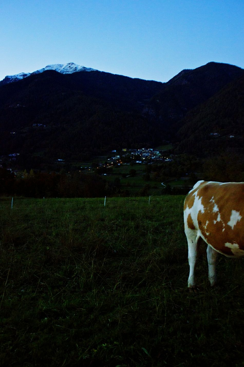 Animal Themes Landscape No People Grass Mucca Beauty