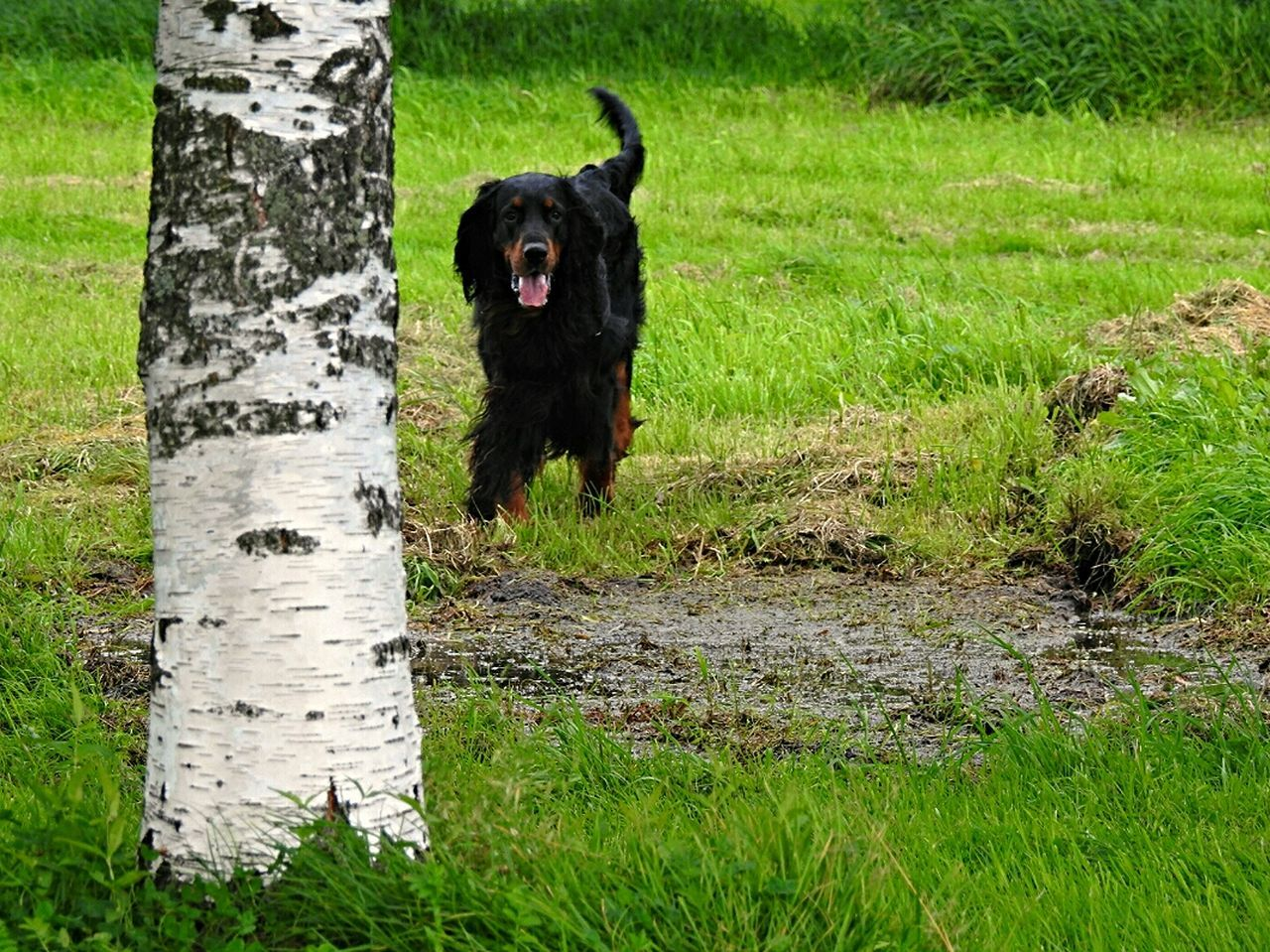 Sakharov Park Sankt-peterburg Dog Walking Home Animals  Green Green Green!  Park Life Russia Summer Views