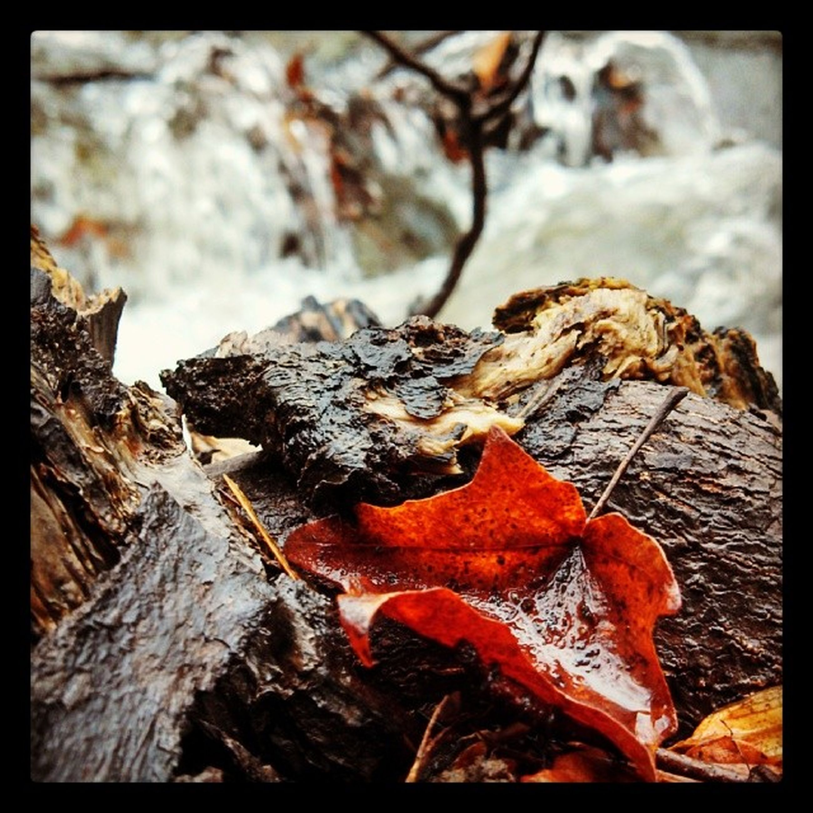 transfer print, close-up, auto post production filter, nature, dry, leaf, autumn, focus on foreground, natural pattern, rock - object, change, tree trunk, brown, selective focus, outdoors, day, season, textured, no people, wood - material