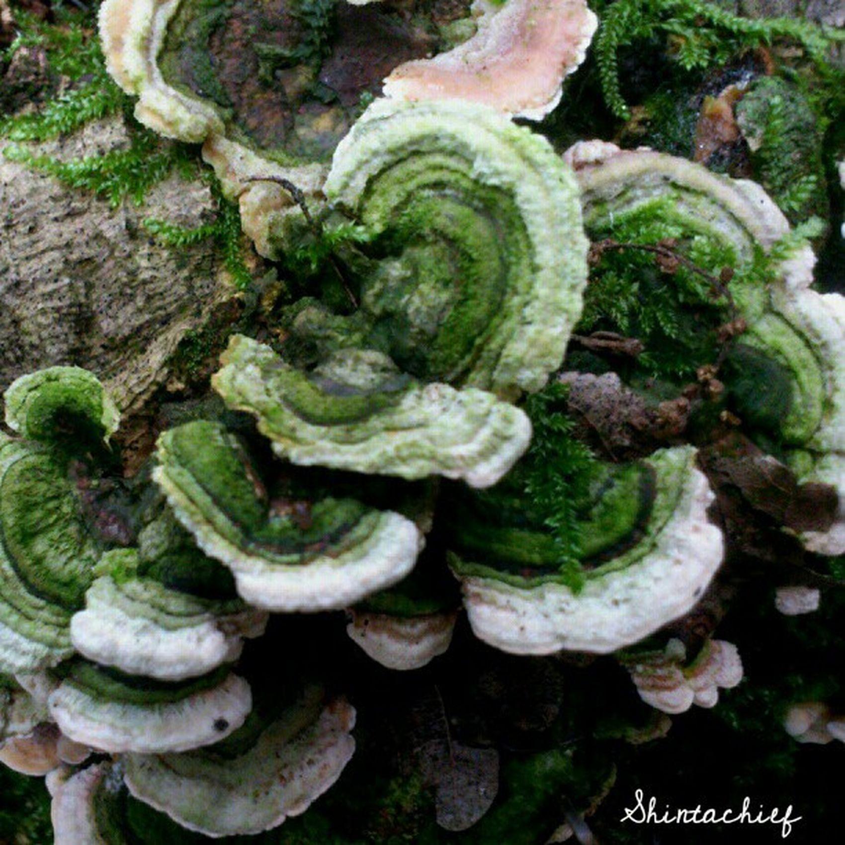 Autumn Tardor Mushroom Boletdesoca girona picoftheday