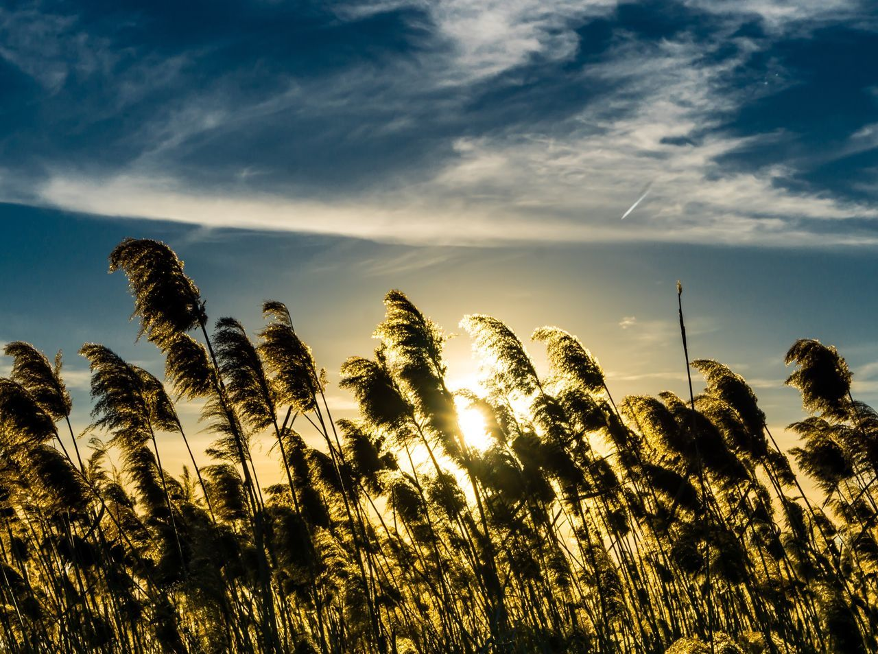 Sunset through the wheat reed. Nature Sky Beauty In Nature Scenics Outdoors Philadelphia Philly Phillyphotographer Photography Landscape Landscape_photography Sunset Wheat Field Wildlife & Nature Sony A6000 50mm Sonyimages