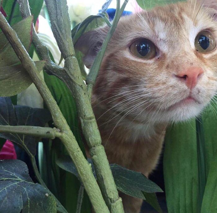 Cat♡ Rubio Blonde Missing You