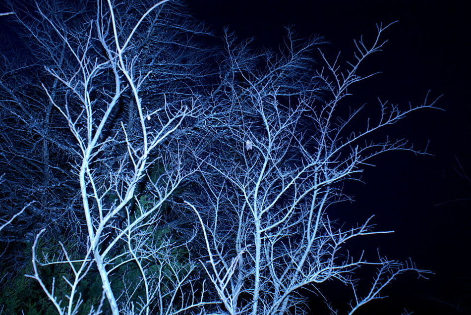 Winter tree branches lit up in the blue night sky, evening woods with effect of light and color done in camera. Bare Branches Beauty In Nature Black Background Blue Blue And White Darkness And Light Evening Moody Nature Night Night Sky Tree White Color Woods