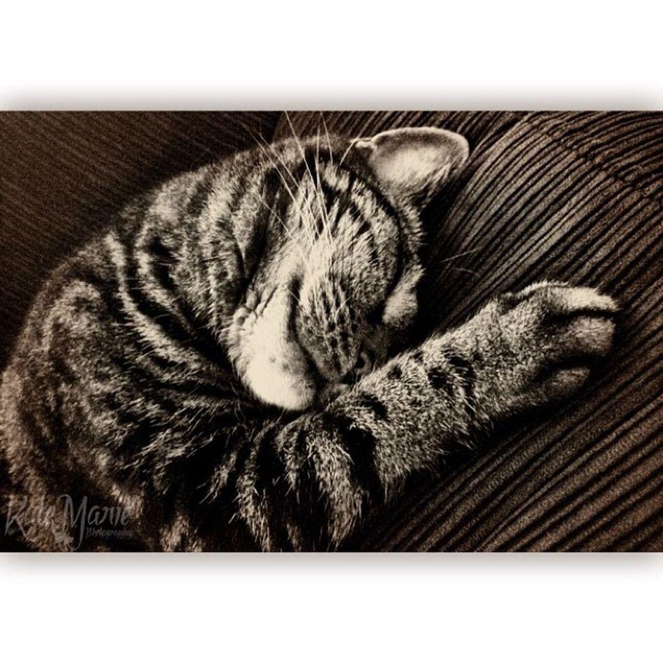 Caturday Cat Cats Crazycatgirl Crazycatlady Catsofig Catsofinstagram Catstagram Fluffy Furry Cameraplus Iwatermark Squareadypro K8marieuk Katemariephotographyuk Tabby TabbyCat Beautiful Petsofig Petstagram Petsofinstagram Cute Stripy