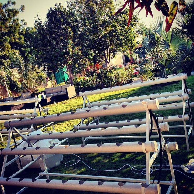 Hydroponics Hydroponicsystem Soilless all set and ready to go.