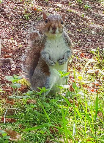 Squirrel Closeup Enjoying The Sun Mobilephotography Cute Hungry Botanical Gardens Edinburgh