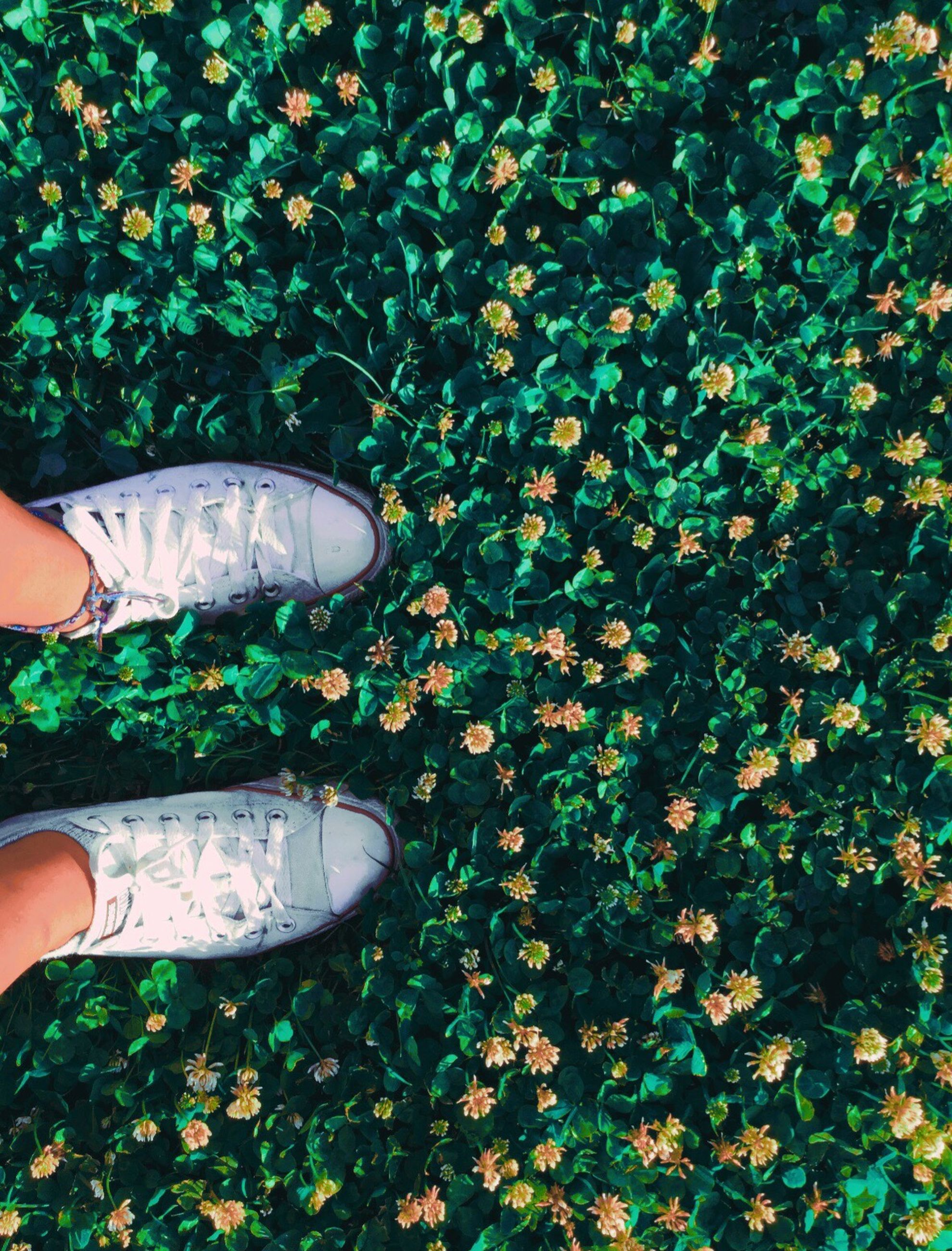 low section, person, personal perspective, shoe, high angle view, human foot, lifestyles, part of, standing, unrecognizable person, leisure activity, footwear, flower, plant, leaf