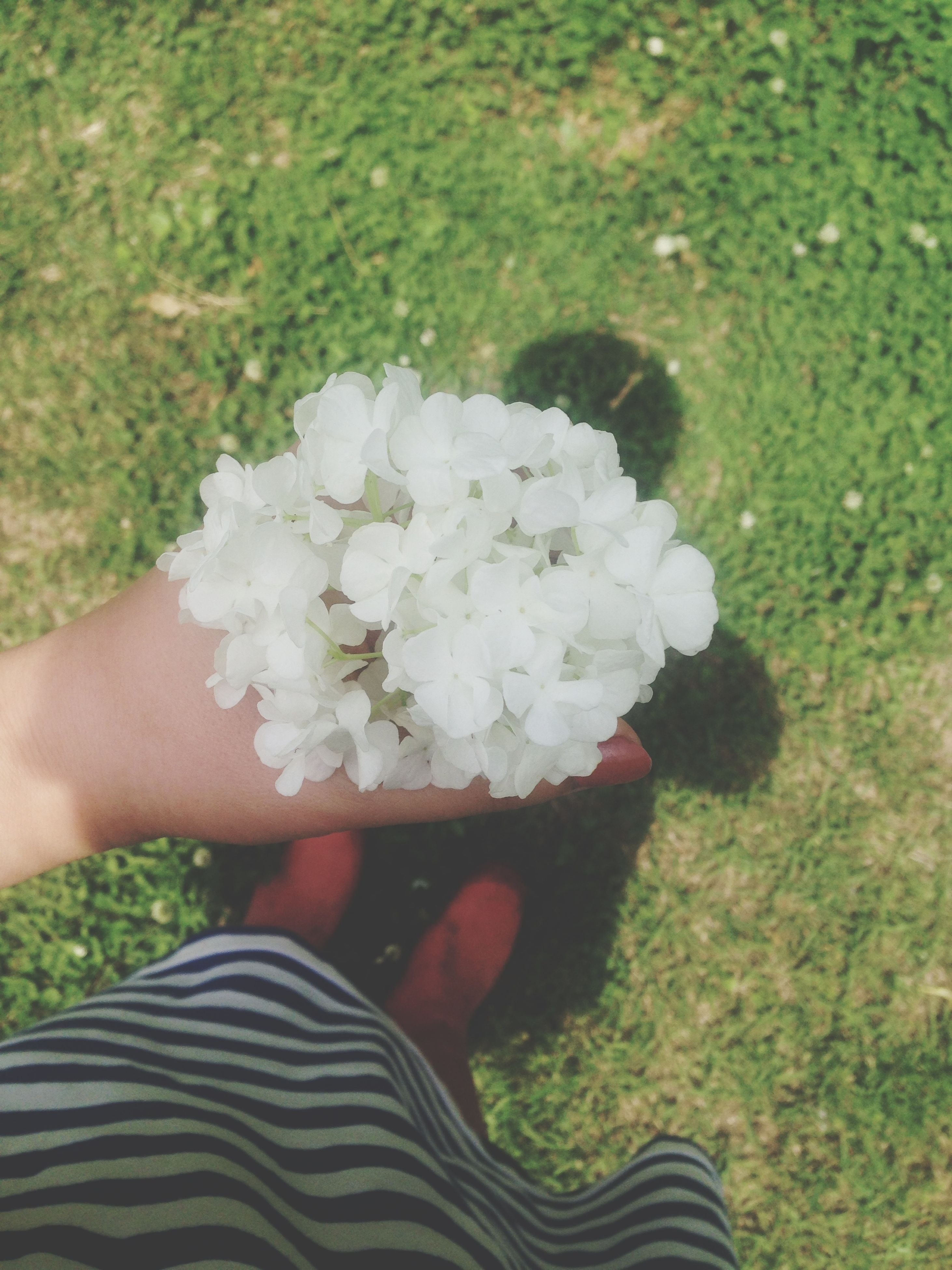 person, personal perspective, lifestyles, flower, holding, leisure activity, part of, low section, unrecognizable person, high angle view, freshness, human finger, cropped, men, white color