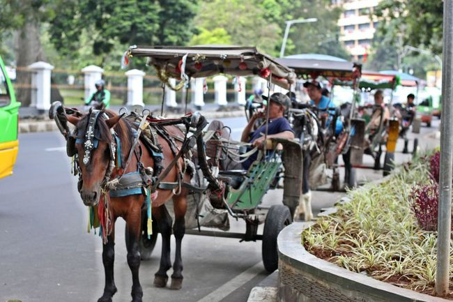 Built Structure Carriage Carriage Ride City Day Horse Horse Transportation Horses Local Transport Local Transportation Mammal Men Mode Of Transport Outdoors Person Real People Transportation