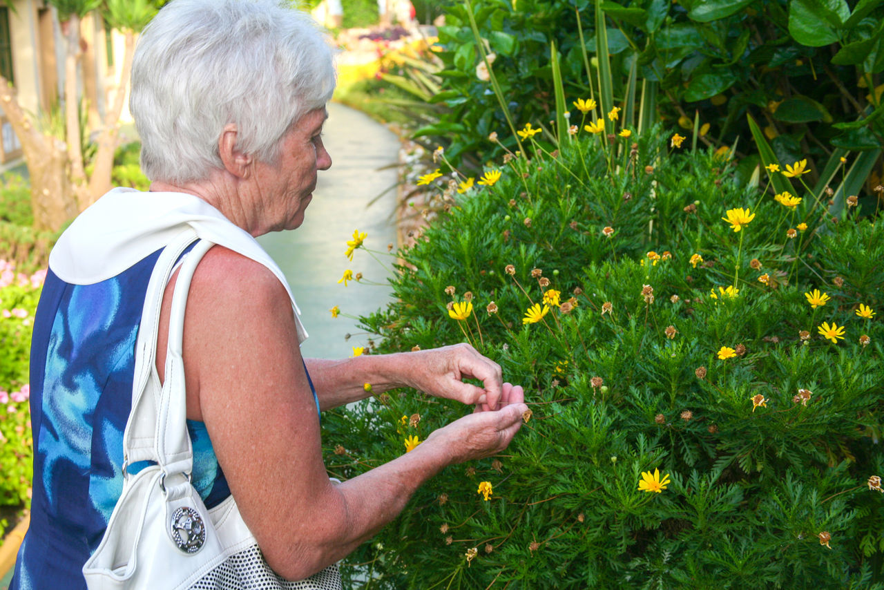 Collecting Elderly Flowers Footpath Grass Gray Hair Outdoors Person Picking Flowers  Plant Relaxation Seeds Flower Seeds I Collect Side View Waist Up Woman