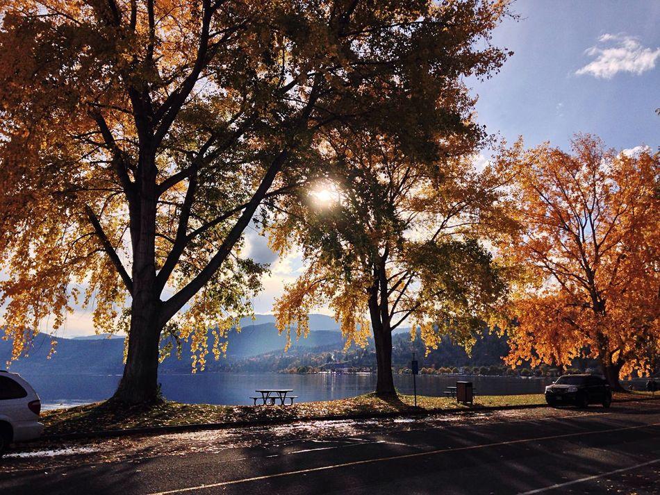 Sun shining through the trees Orange Leaves October British Columbia Peachland Fall Colors Fall Beauty