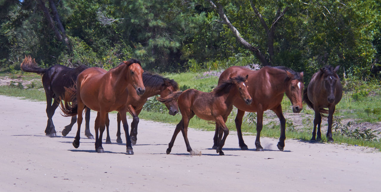 Animal Animal Themes Baby Horse Brown Day Friendship Herbivorous Horse Horse Family Mammal Standing Togetherness Wild Horses