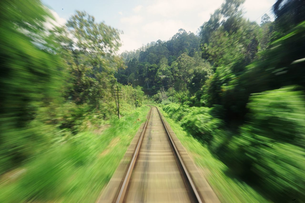 The Way Forward Tree Railroad Track Rail Transportation Transportation Growth Day Nature Green Color No People Outdoors Sky