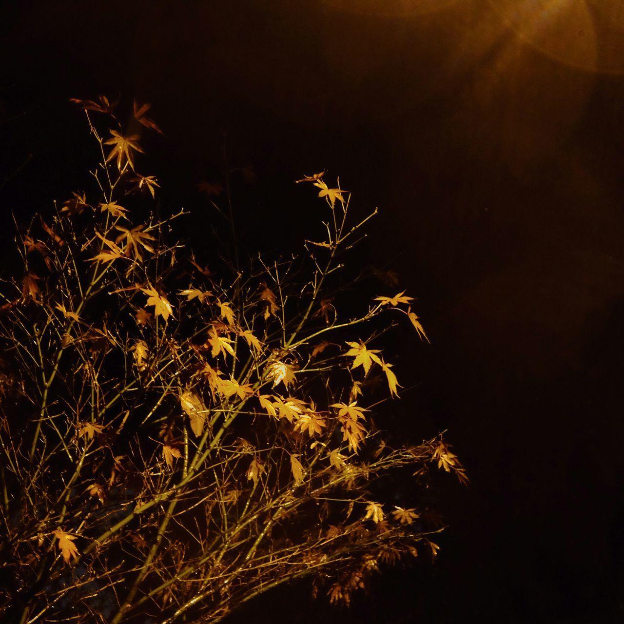 Hanging Out Leaves Night View Night Enjoying Life 富士 Fujifilm China Colors Hello World Eye4photography  EyeEm Best Shots - Nature Trees Taking Photos EyeEm Best Shots Rian Nightphotography