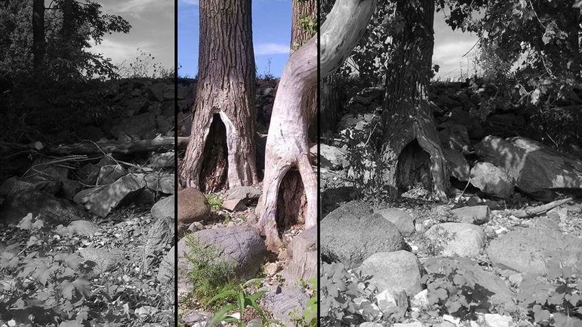 Trees along the lake.... Tree Tree Trunk Growth Outdoors Day No People Nature Sky