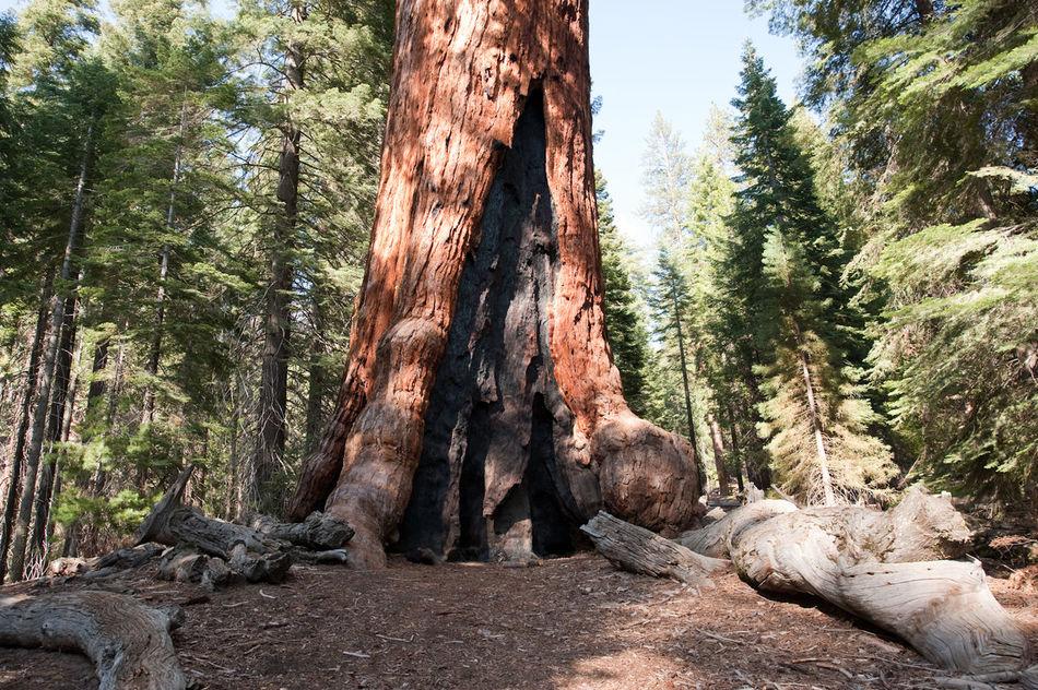 Beautiful stock photos of tree, Ancient, Burrow, Evergreen, Flora