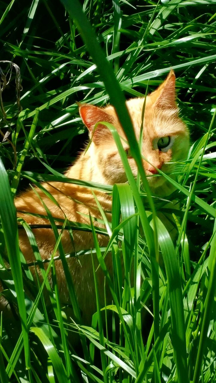Portrait Of Cat Amidst Plants On Field