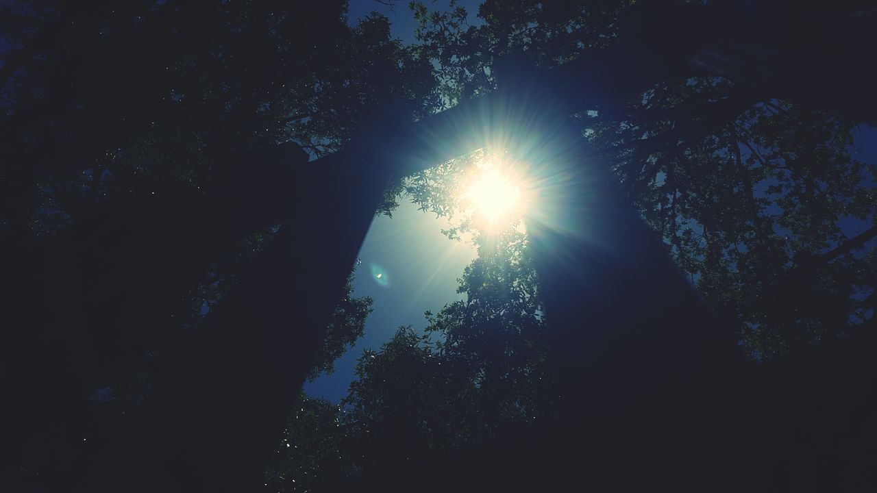 tree, sunbeam, nature, sun, silhouette, beauty in nature, tranquility, low angle view, no people, outdoors, forest, scenics, day, sky