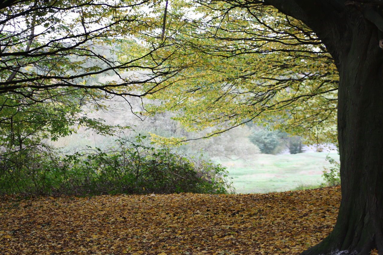 Beauty In Nature Branch Day Forest Growth Hampstead Heath Landscape Nature No People Outdoors Scenics Tranquility Tree Water
