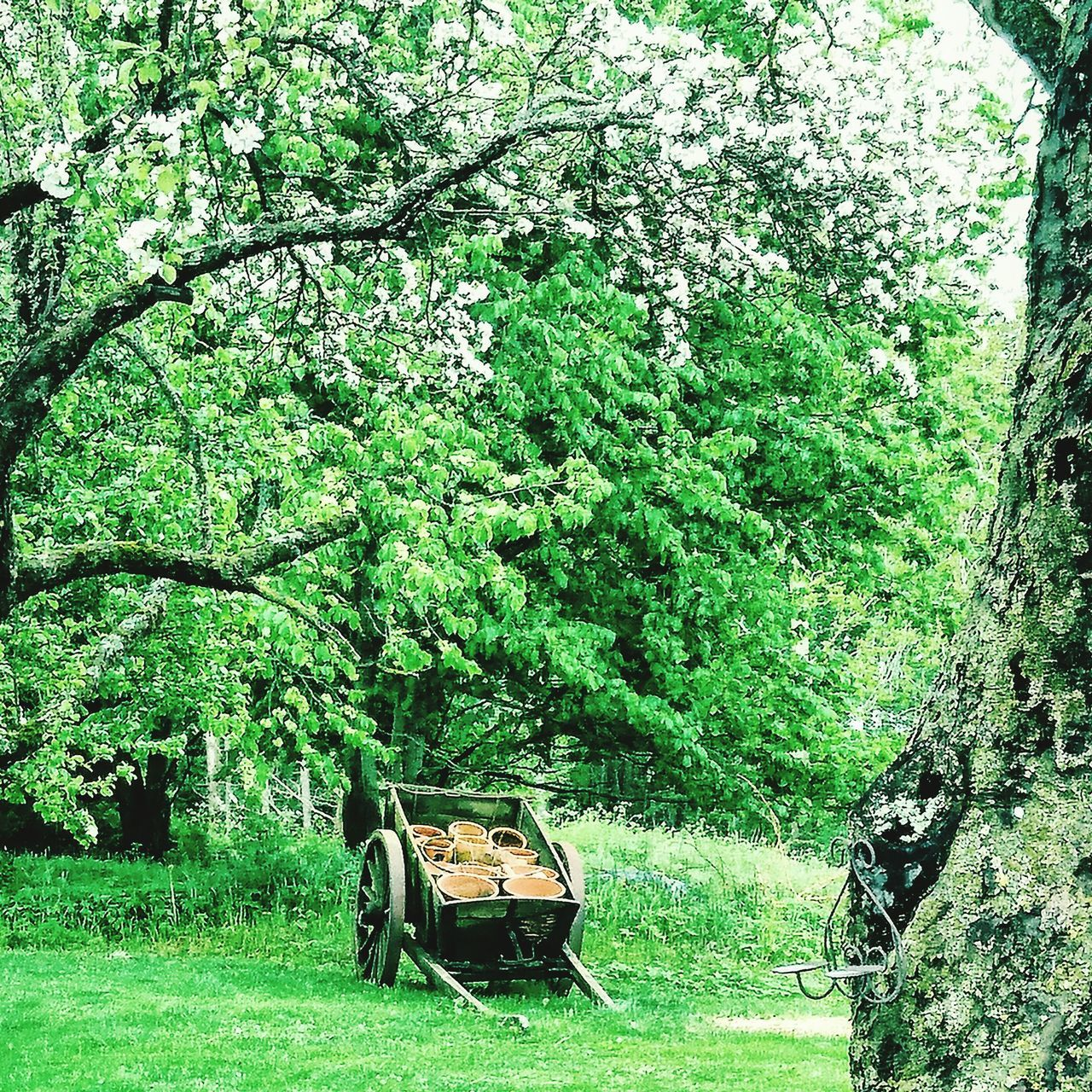 Green Color Growth Nature Tree No People Beauty In Nature Outdoors Day Garden Landscape_Collection Landscape Spring Summer Barrel Old
