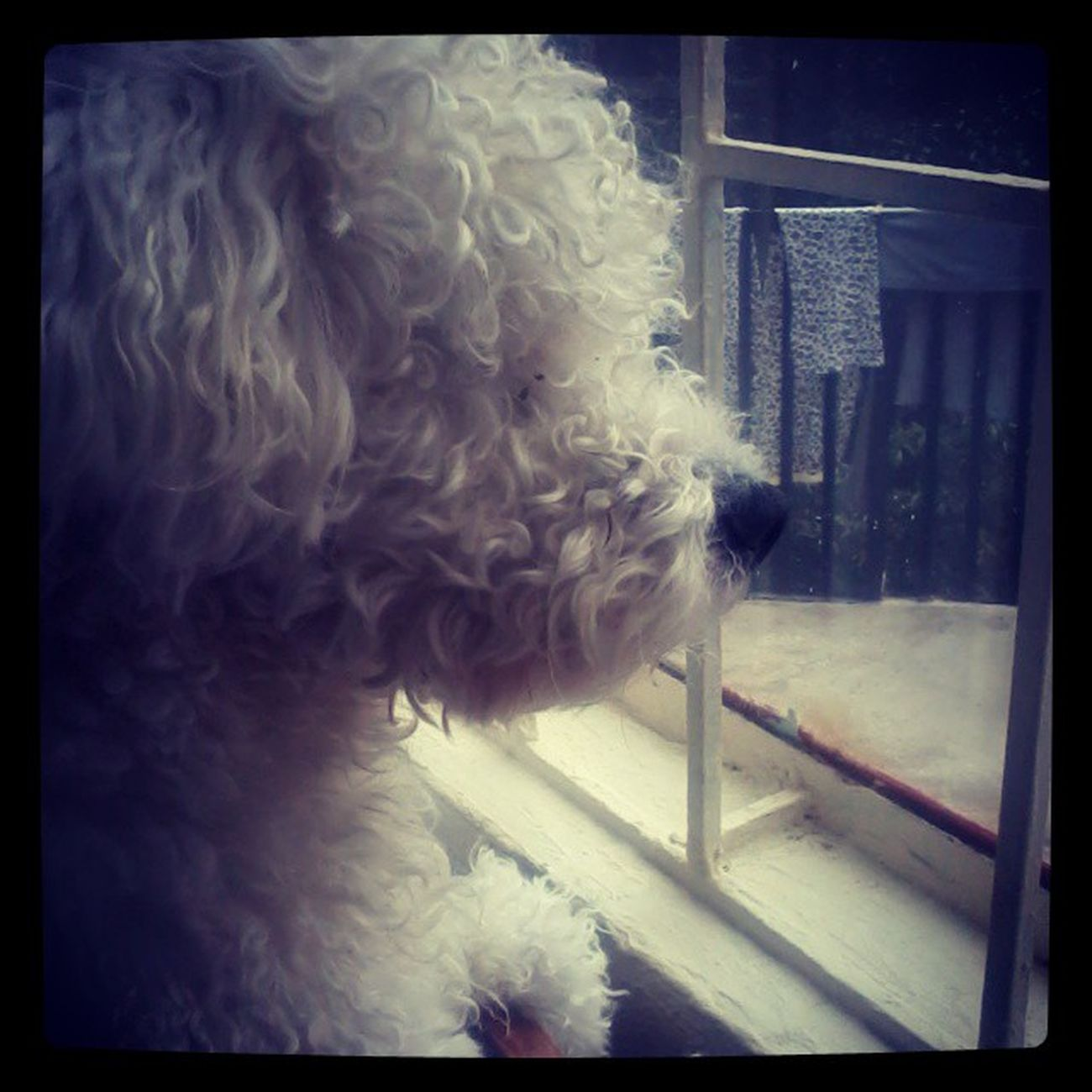 Como te gusta mirar conmigo por la ventana Instandog As Mamon Travieso tequiero