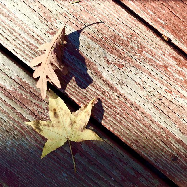 Fall has arrived. Romantic Getaway EyeEm Best Shots Fall Leaves Autumn Colors Sun Light