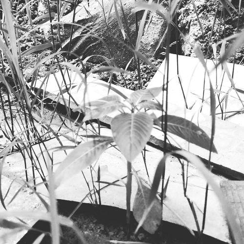 Suker mburi omah Plant Outdoors First Eyeem Photo